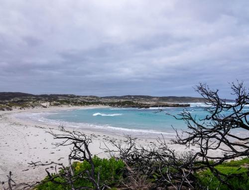 Through the lens: Kangaroo Island in bushfire recovery